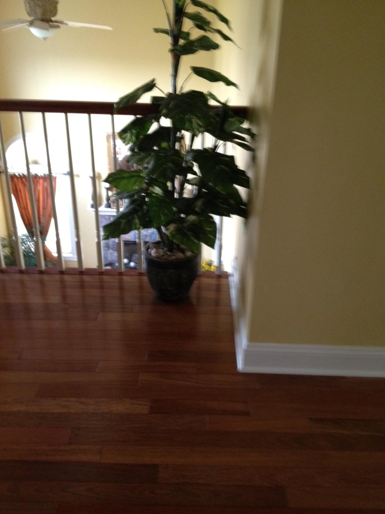 "IndusParquet 3"" Brazilian Cherry 3 4 Solid Hardwood Flooring"